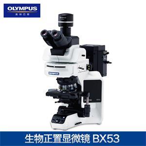 奧林巴斯BX53生物顯微鏡